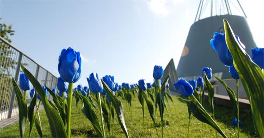 tu-delft-tulips